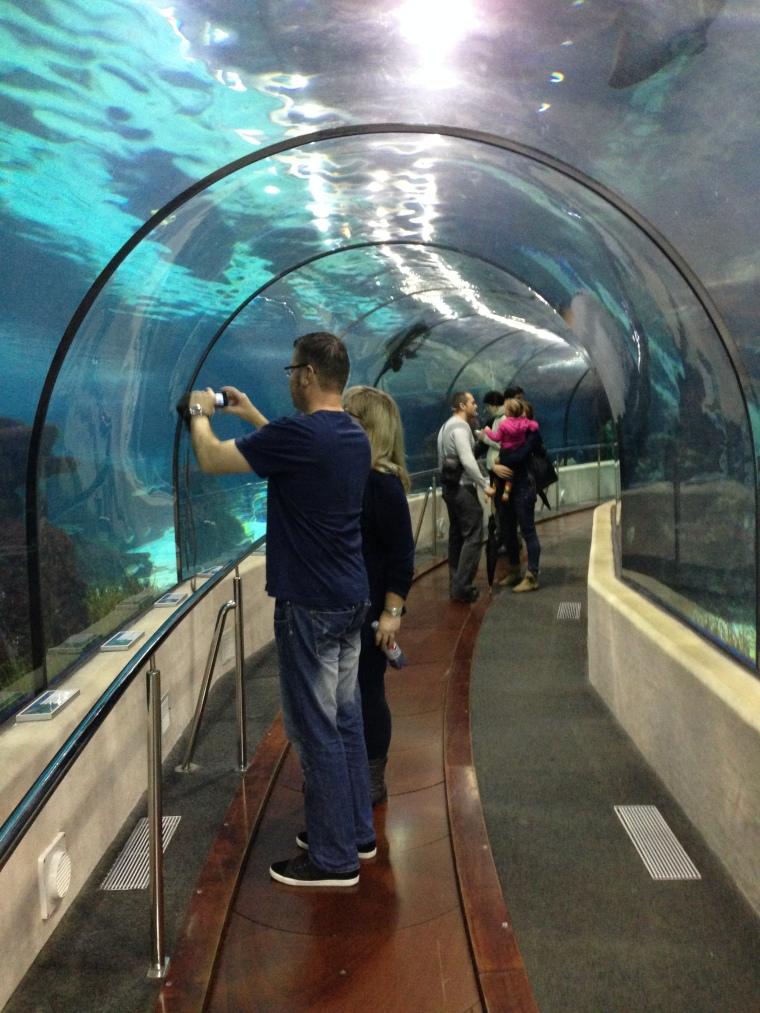 Barcelona aquarium, Spain